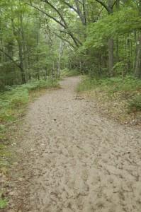 Petsokey State Park Mt. Baldy Hiking Trail