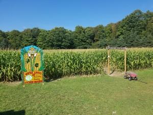 Knaebe's Corn Maze Rogers City MI