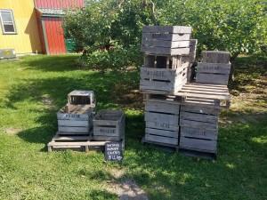 Knaebe's Mmmunchy Krunchy Apple Farm Antiques Rogers City