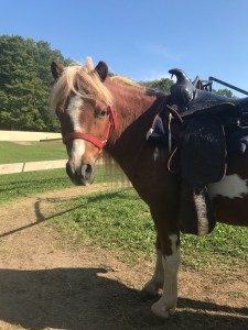 Knaebe's Mmmunchy Krunchy Apple Farm Pony Rides