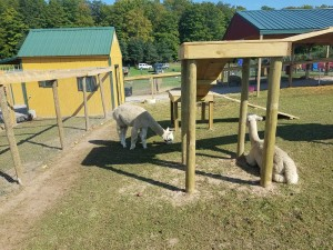 Knaebe's Petting Zoo Rogers City