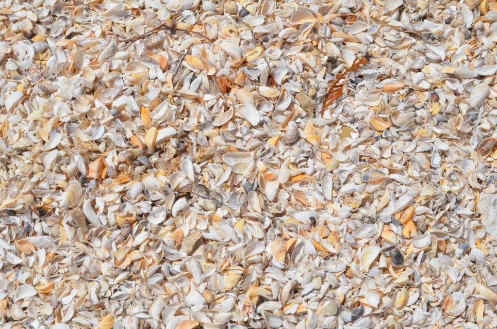 Seul Choix Point Lighthouse Lake Michigan Seashells
