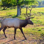 Michigan Roadside Attractions: Gaylord Elk View Park