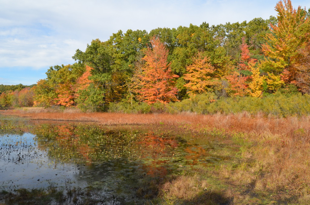 Fall color at Pickerel Lake Park (Kent County)