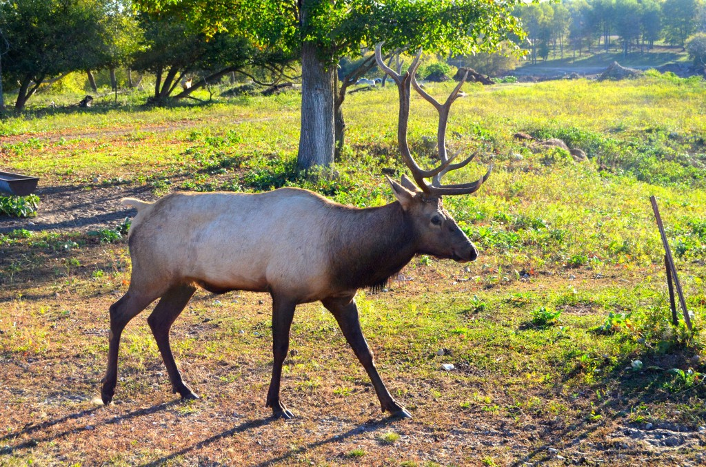 Gaylord City Elk Park