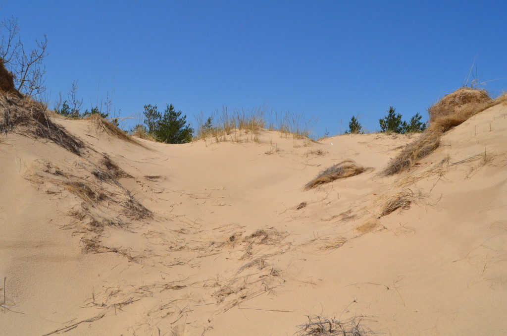 Silver Lake State Park Dune Hiking Trail Michigan