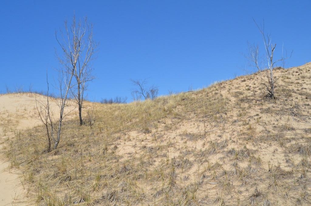 Silver Lake State Park Sand Dune Vegetation Michigan