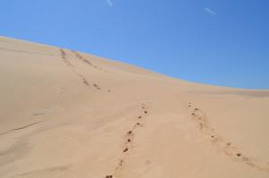 Silver Lake State Park Sand Dunes Footprints Michigan