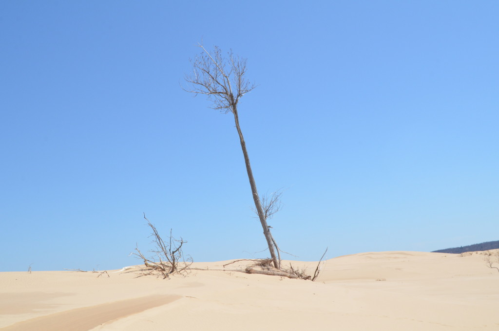 Silver Lake State Park Sand Dunes Lonely Tree