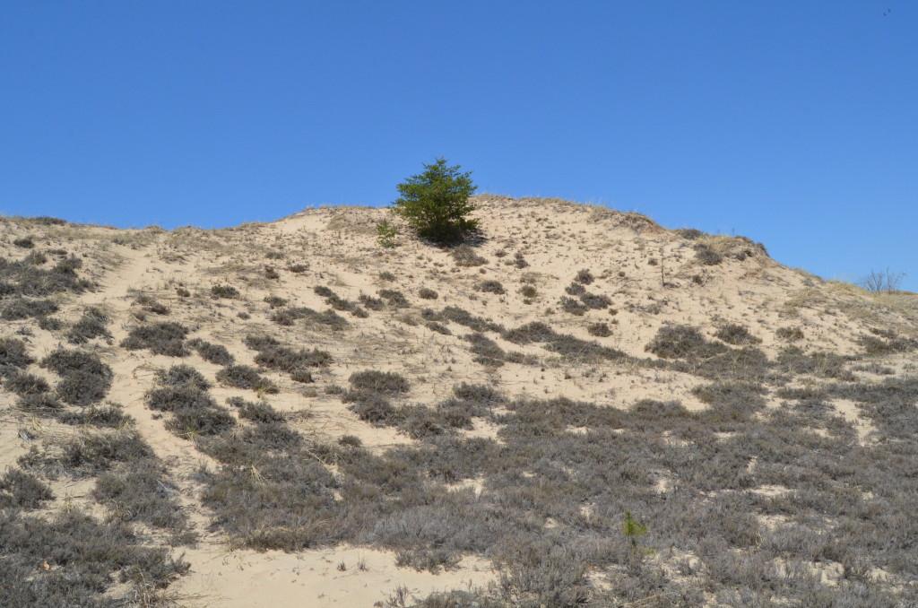 Silver Lake State Park Sand Dunes Ridge Dunegrass