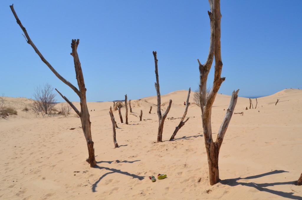 Silver Lake State Park Sand Dunes Trees Michigan