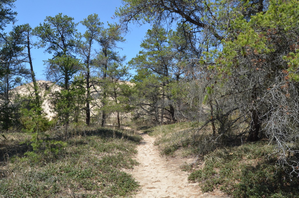 Silver Lake State Park Sand Dunes Wooded Hiking Trail