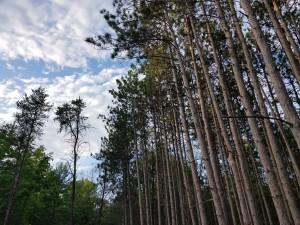 Alpena Island Park Trees Clouds Wildlife Sanctuary