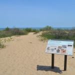 Negwegon State Park – Beauty and Seclusion on the Lake Huron Shore