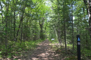 Negwegon State Park Hiking Trail Michigan