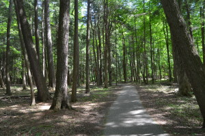 Hartwick Pines State Park Best Michigan Birdwatching