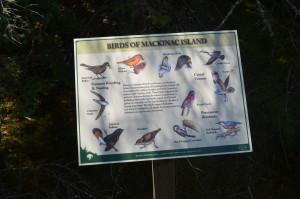 Mackinac Island Best Michigan Birdwatching