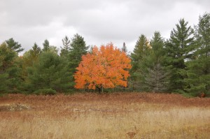 Fall Color Upper Peninsula Michigan