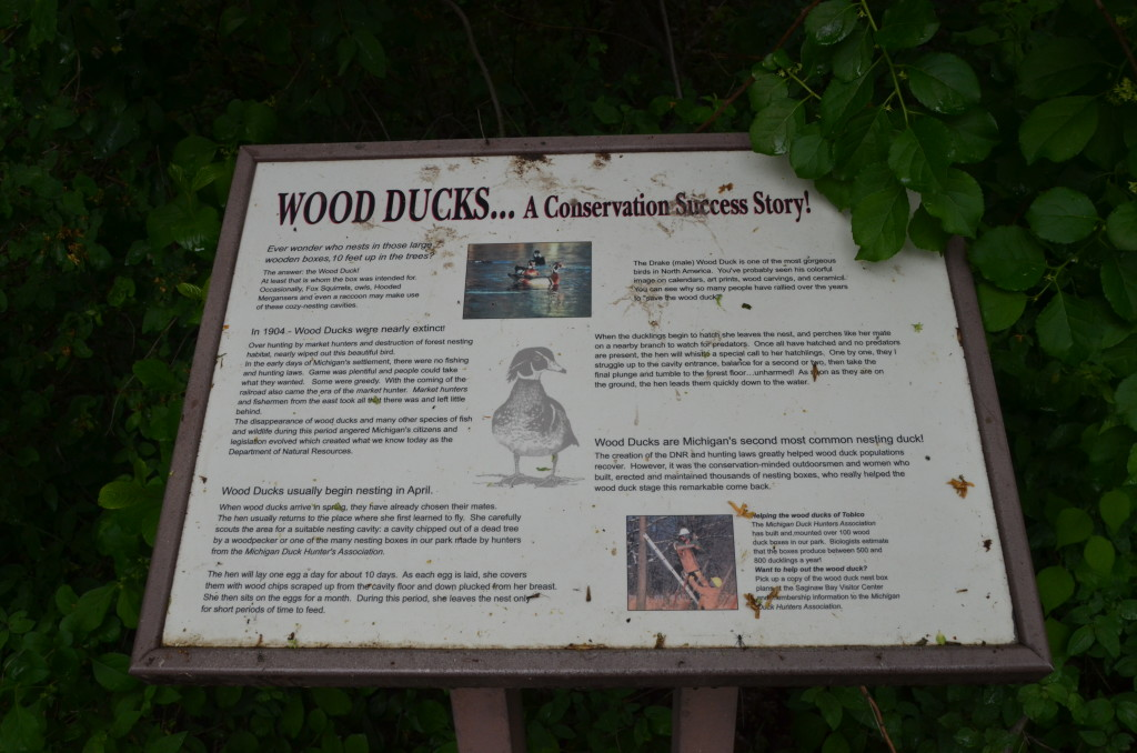 Bay City State Park Wood Duck Information Michigan