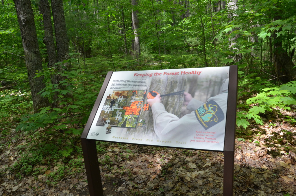 Hartwick Pines State Park Keeping Forest Healthy