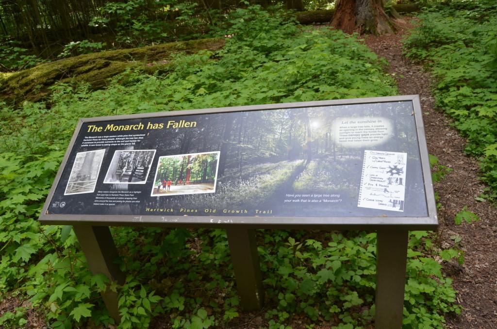 Hartwick Pines State Park Monarch Has Fallen