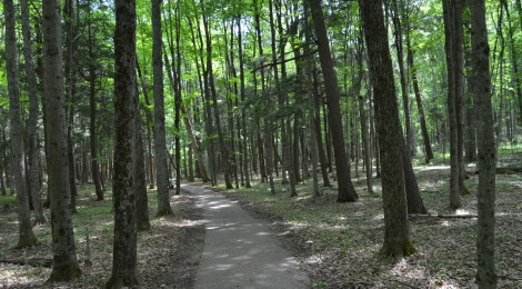 Photo Gallery Friday: Hartwick Pines State Park, Grayling