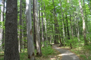 Hartwick Pines State Park Old Growth Forest hike