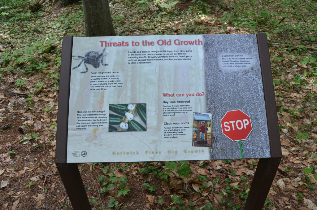 Hartwick Pines State Park Threats to Forest