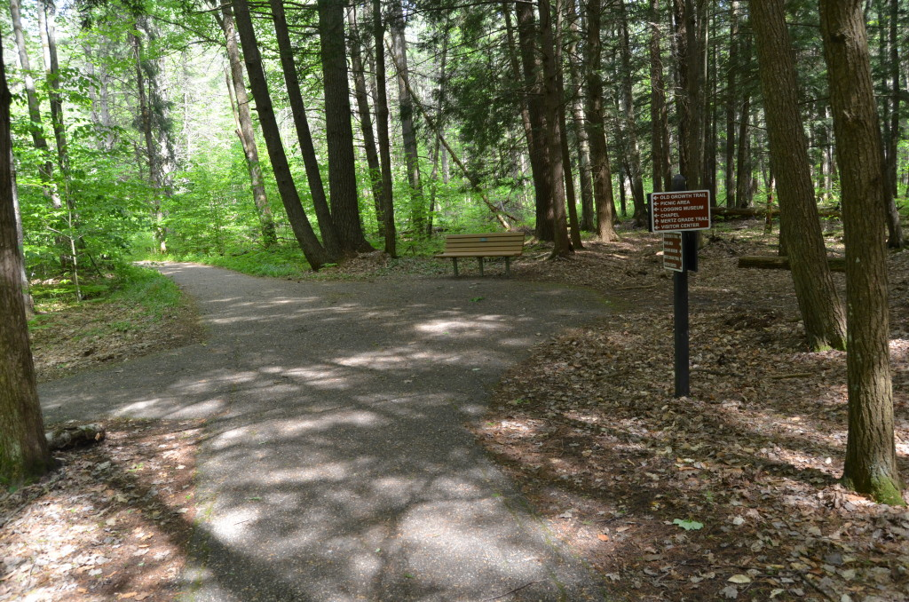 Hartwick Pines State Park Trail Intersection Forest