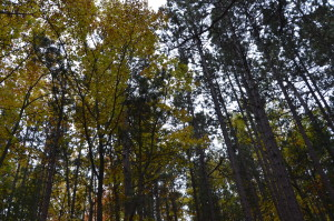 Whitefish Bay Scenic Byway Big Pines Day Use Area Michigan