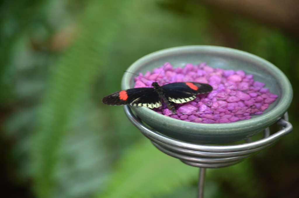 Butterflies Are Blooming Frederik Meijer Gardens 2019