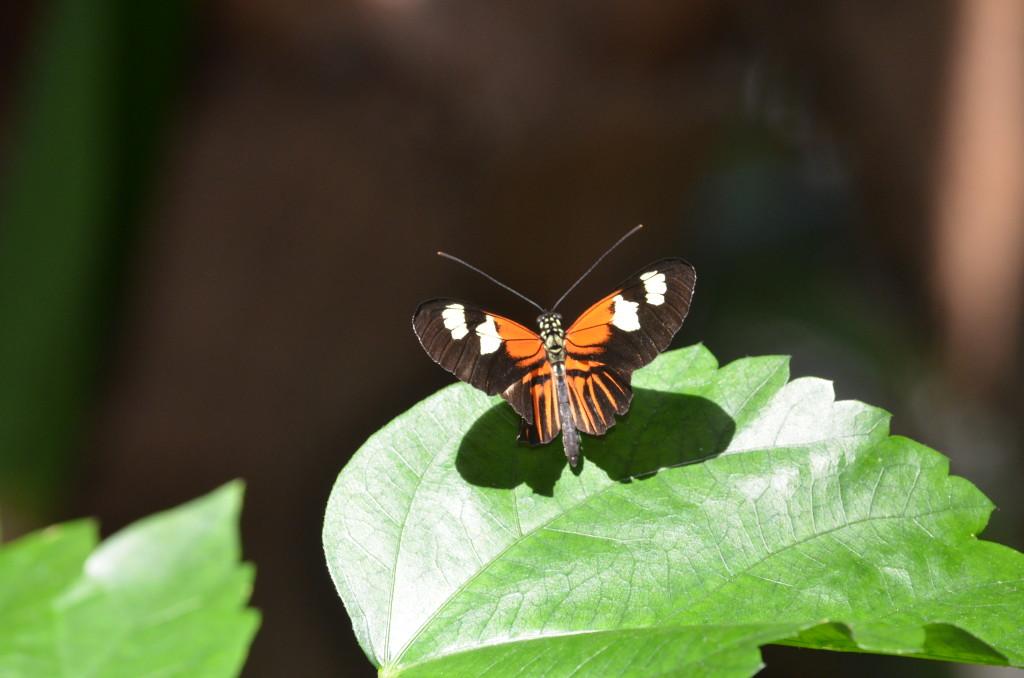 Butterflies Are Blooming Frederik Meijer Gardens 2019 C