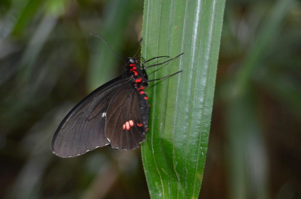 Butterflies Are Blooming Frederik Meijer Gardens 2019 E