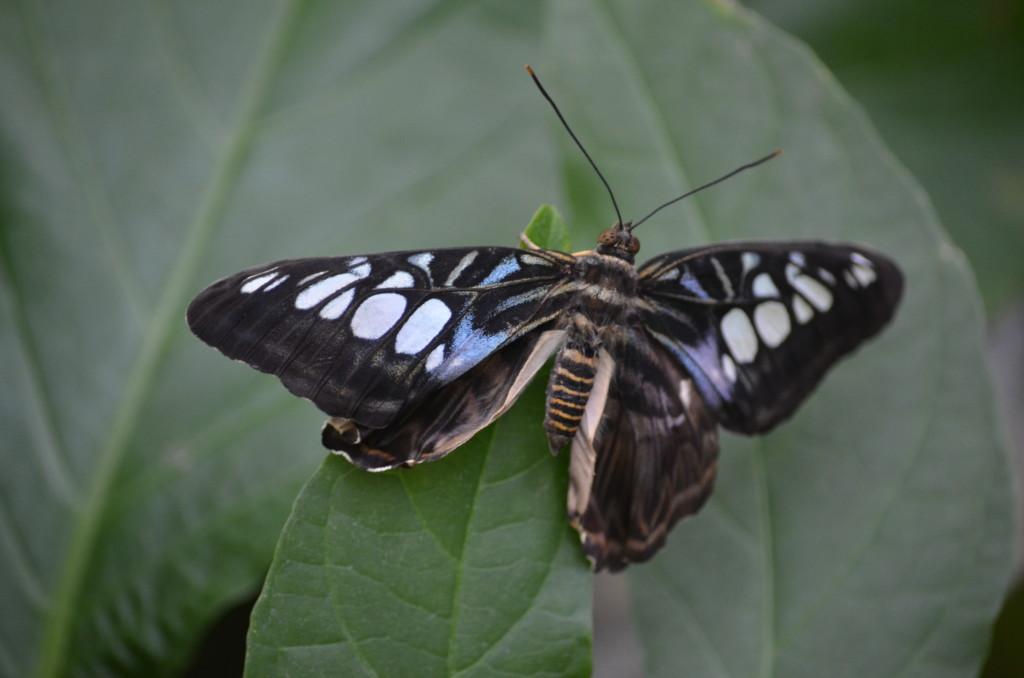 Butterflies Are Blooming Frederik Meijer Gardens 2019 G