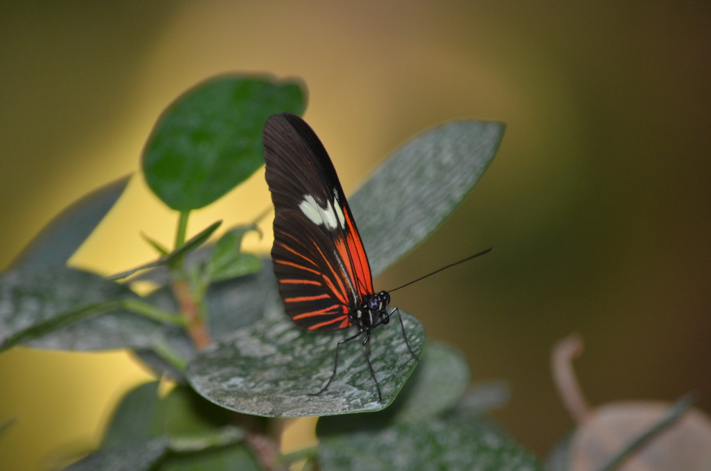 Butterflies Are Blooming Frederik Meijer Gardens 2019 I