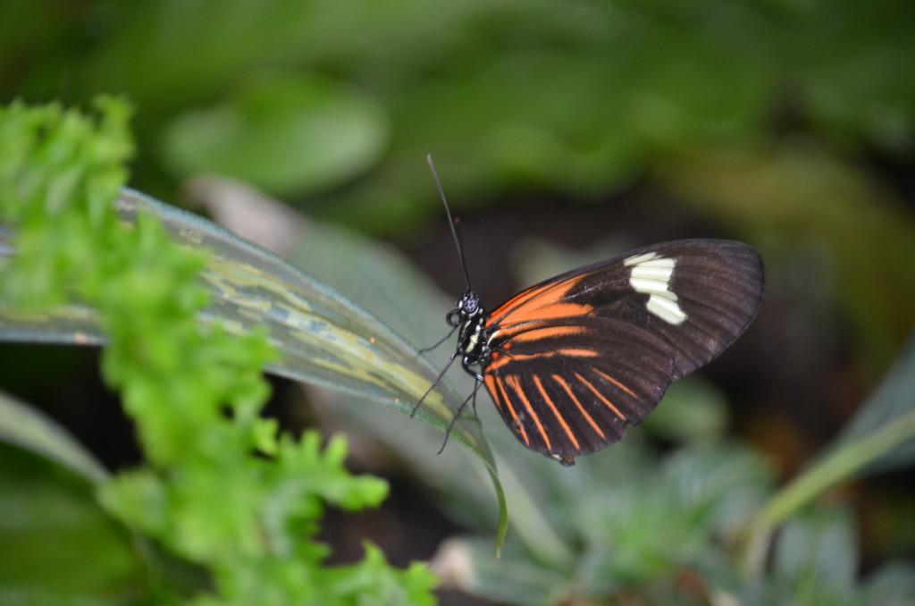 Butterflies Are Blooming Frederik Meijer Gardens 2019 K