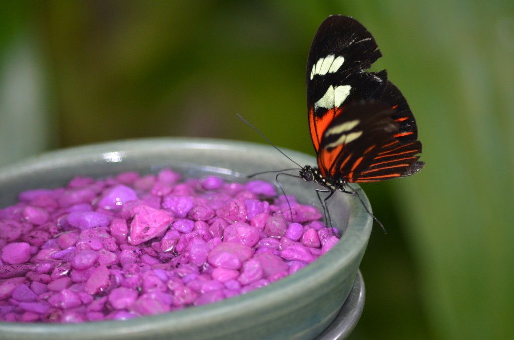 Butterflies Are Blooming Frederik Meijer Gardens 2019 L