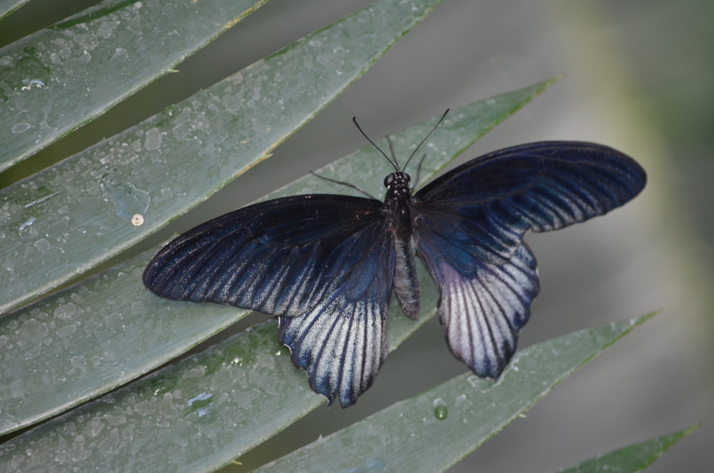 Butterflies Are Blooming Frederik Meijer Gardens 2019 M