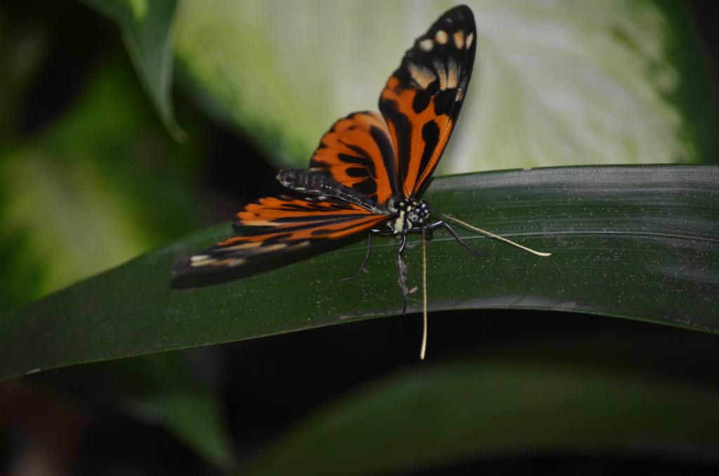 Butterflies Are Blooming Frederik Meijer Gardens 2019 N