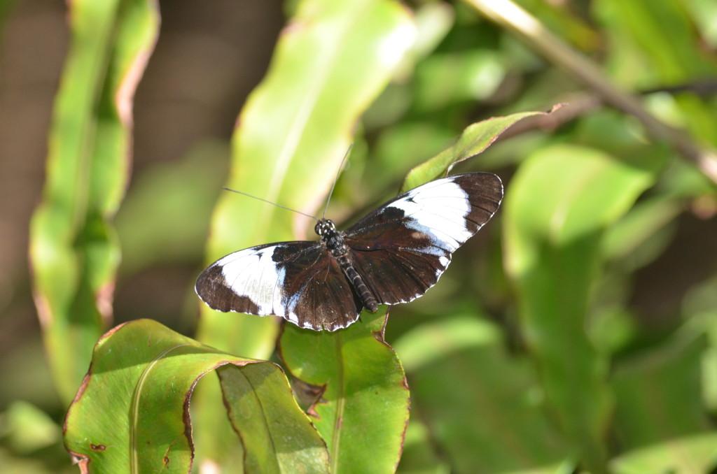 Butterflies Are Blooming Frederik Meijer Gardens 2019 O