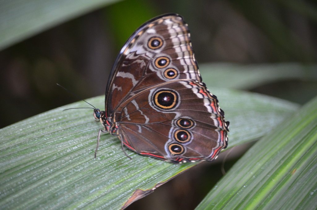 Butterflies Are Blooming Frederik Meijer Gardens 2019 P
