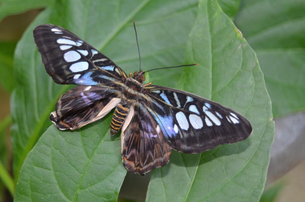 Butterflies Are Blooming Frederik Meijer Gardens 2019 Q