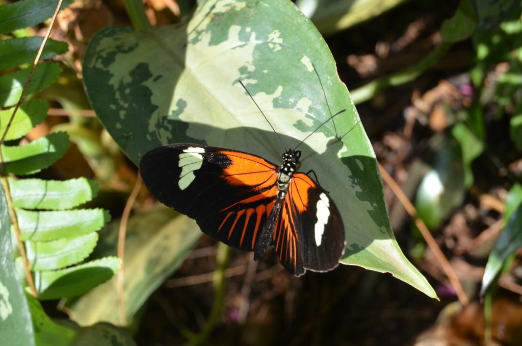 Butterflies Are Blooming Frederik Meijer Gardens 2019 R