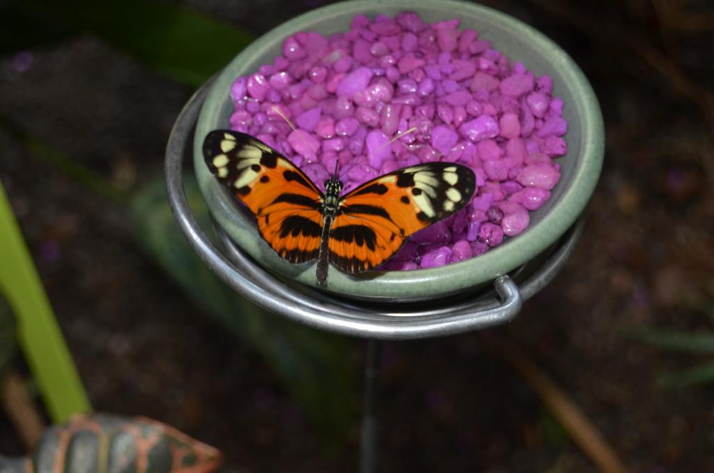 Butterflies Are Blooming Frederik Meijer Gardens 2019 T