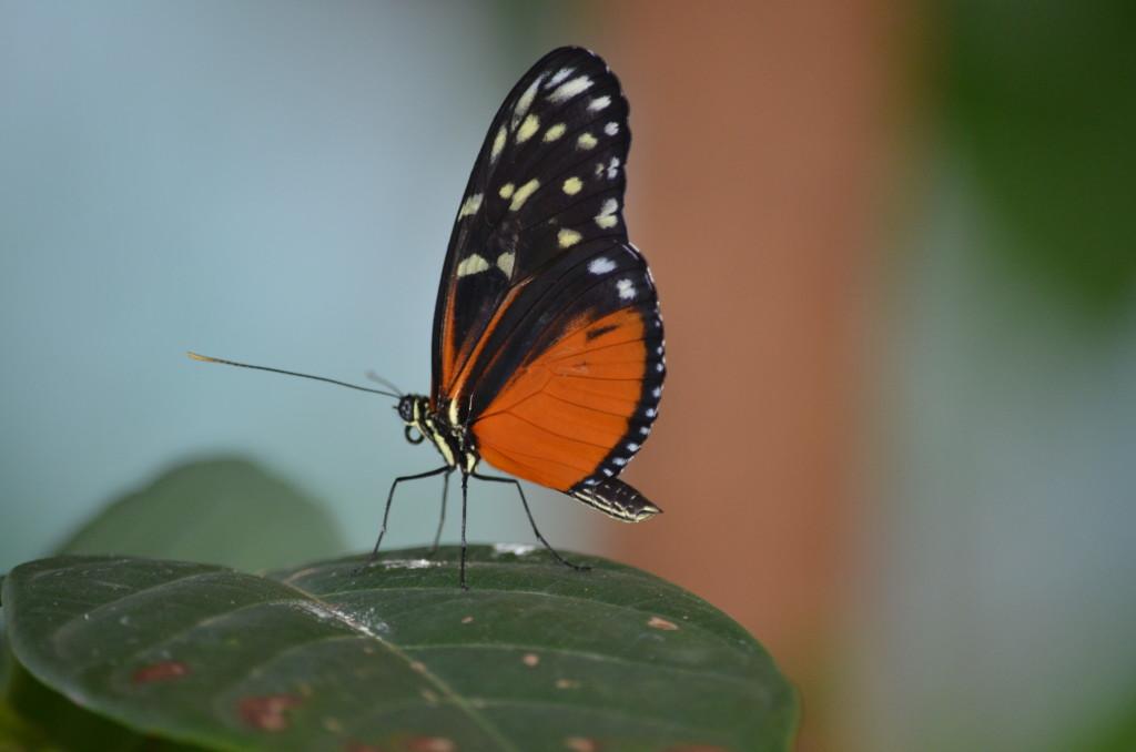 Butterflies Are Blooming Frederik Meijer Gardens 2019 U