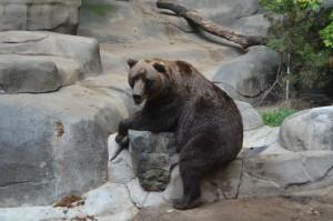JOHN BALL ZOO Rock Roar & Pour Brown Bear