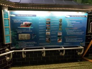 Belle Isle Aquarium Invasive Species Display