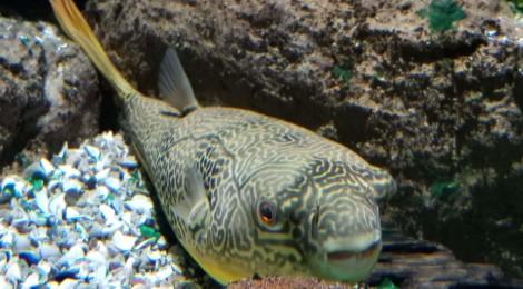 Belle Isle Aquarium - Detroit, Michigan