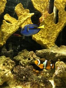 Belle Isle Aquarium Finding Nemo Dory
