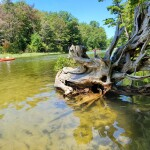 Is Michigan's Platte River Campground the Best Campground in America?